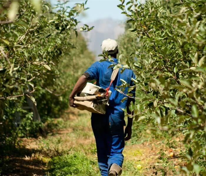 Ceres Fruit Processors - Salience Branding and Web Development